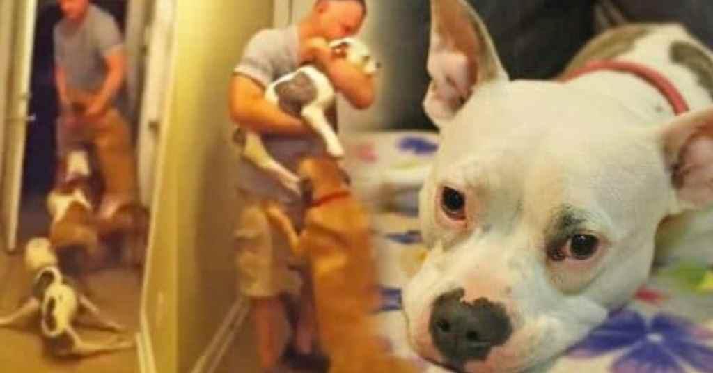 verlamd hondje 3