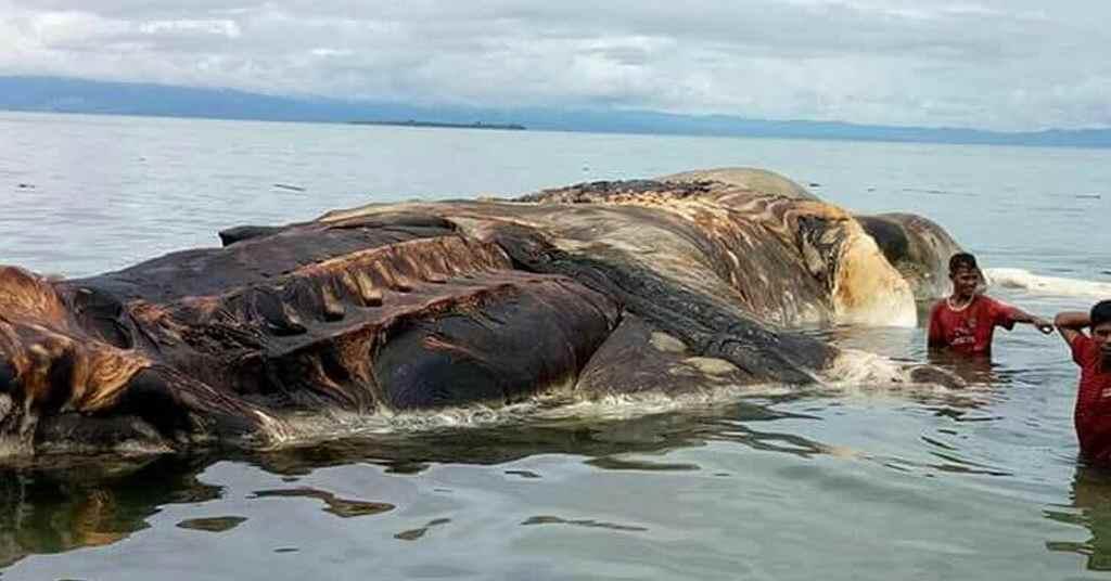 walvisjacht 5