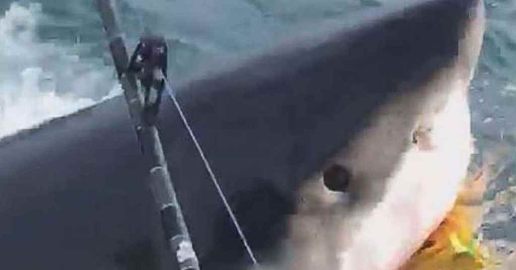 witte haai 2