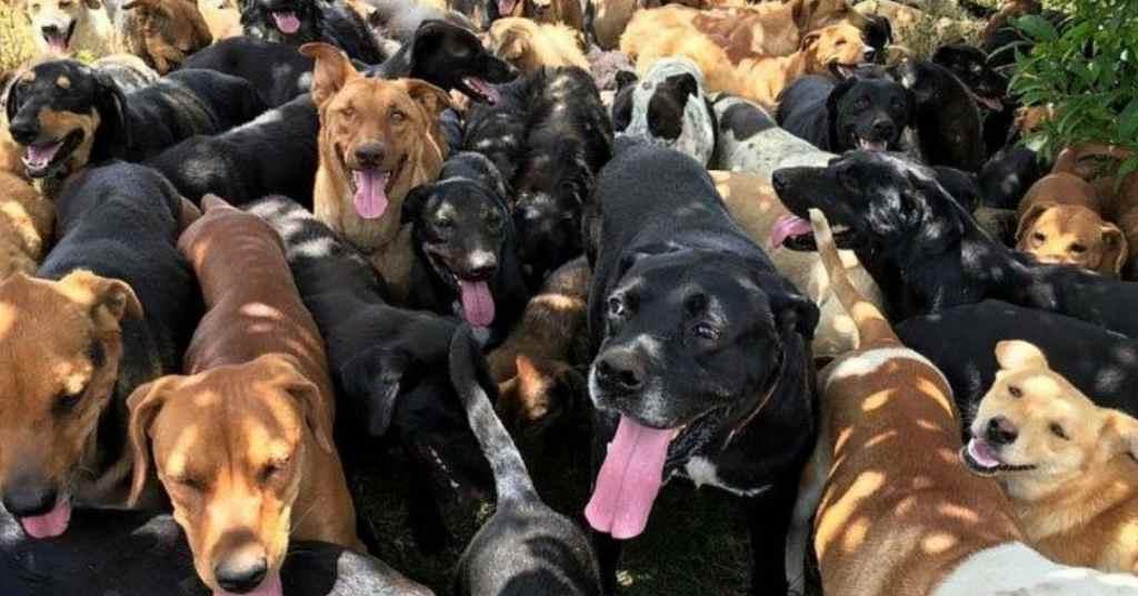 zwerfhonden in een hondenparadijs 2