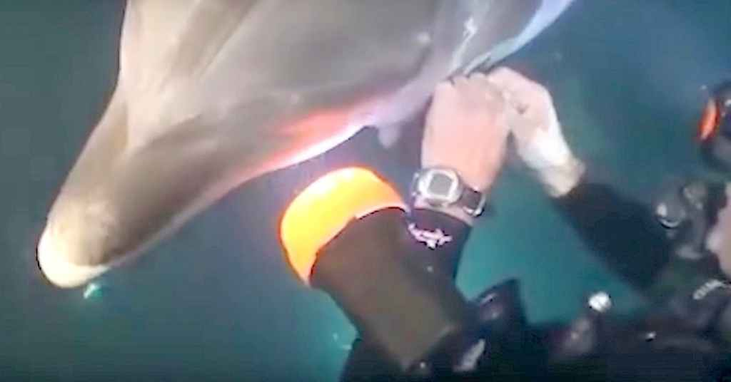 dolfijn vraagt om hulp 3