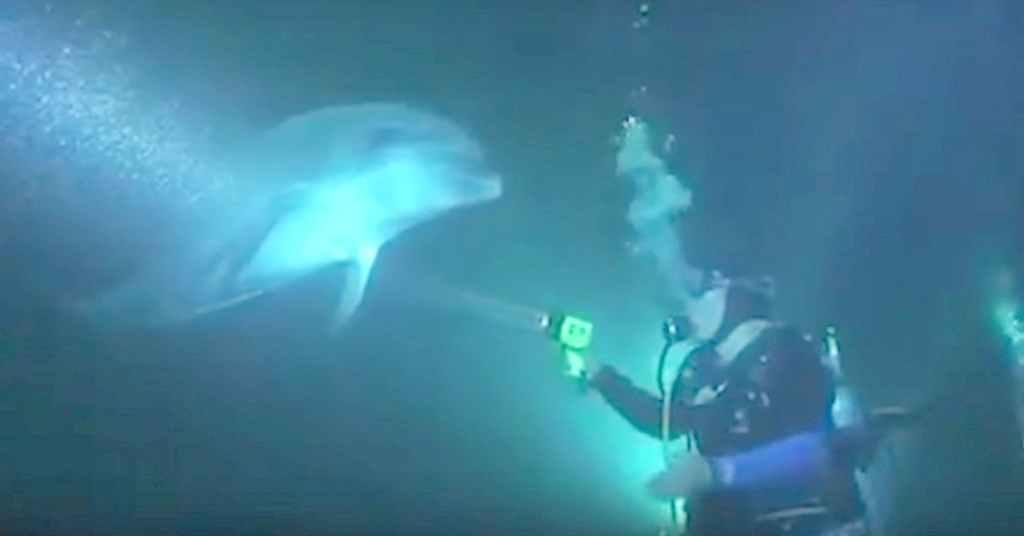 dolfijn vraagt om hulp