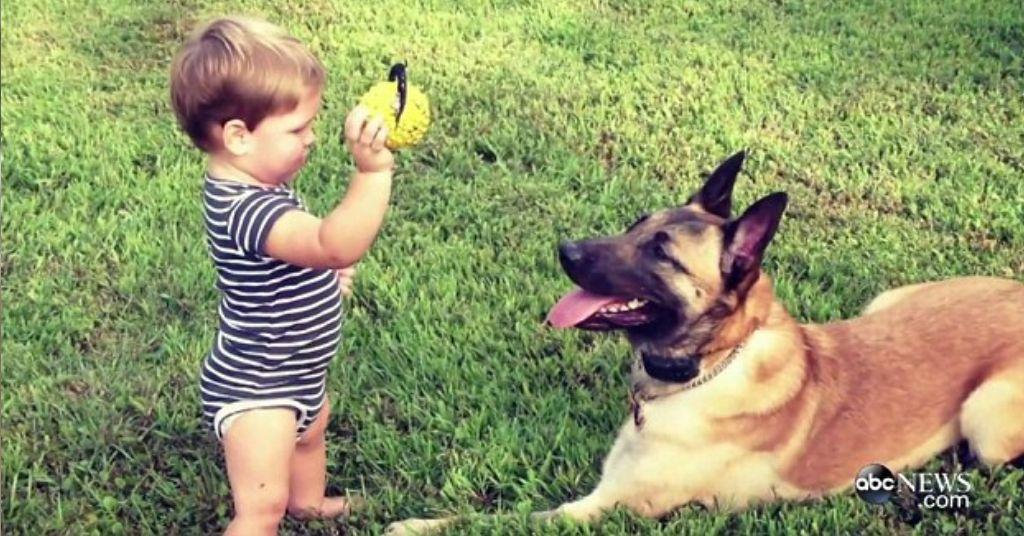 hond adopteren 5