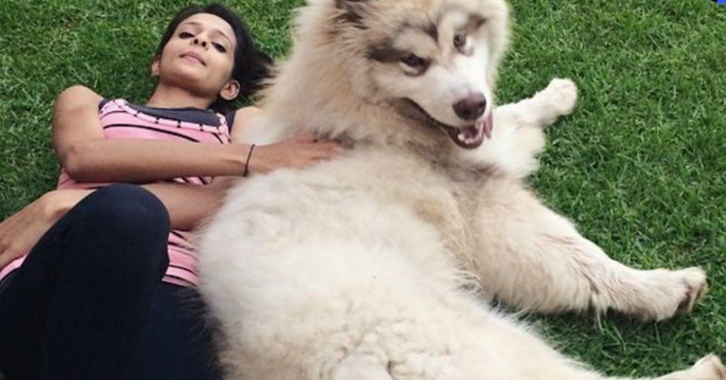 hondenvoedsel 1