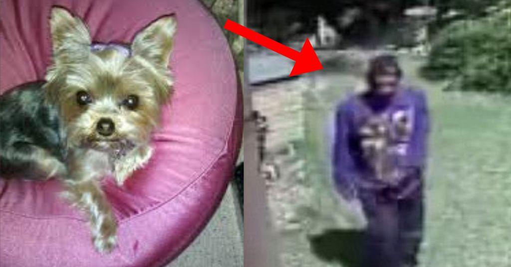 inbraak tegengehouden door hond 4