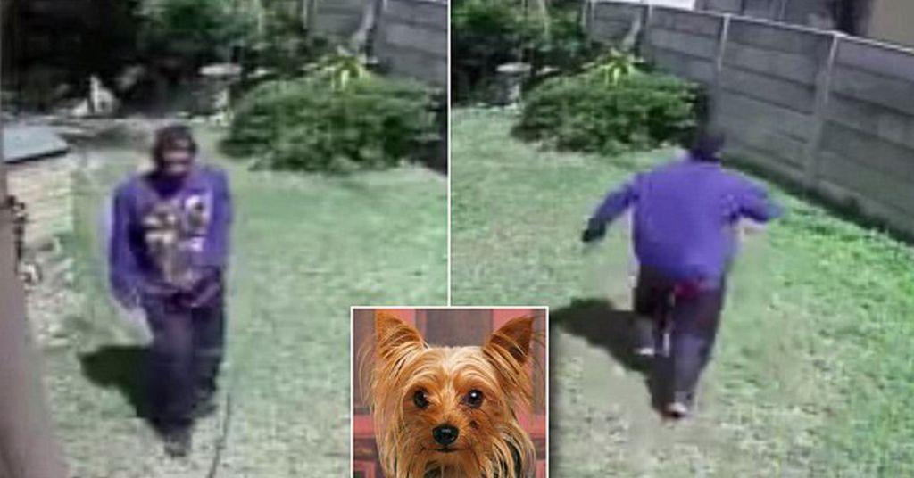 inbraak tegengehouden door hond