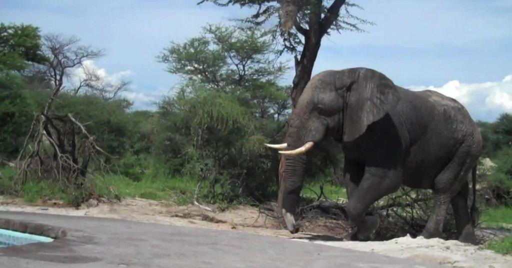 olifant 3