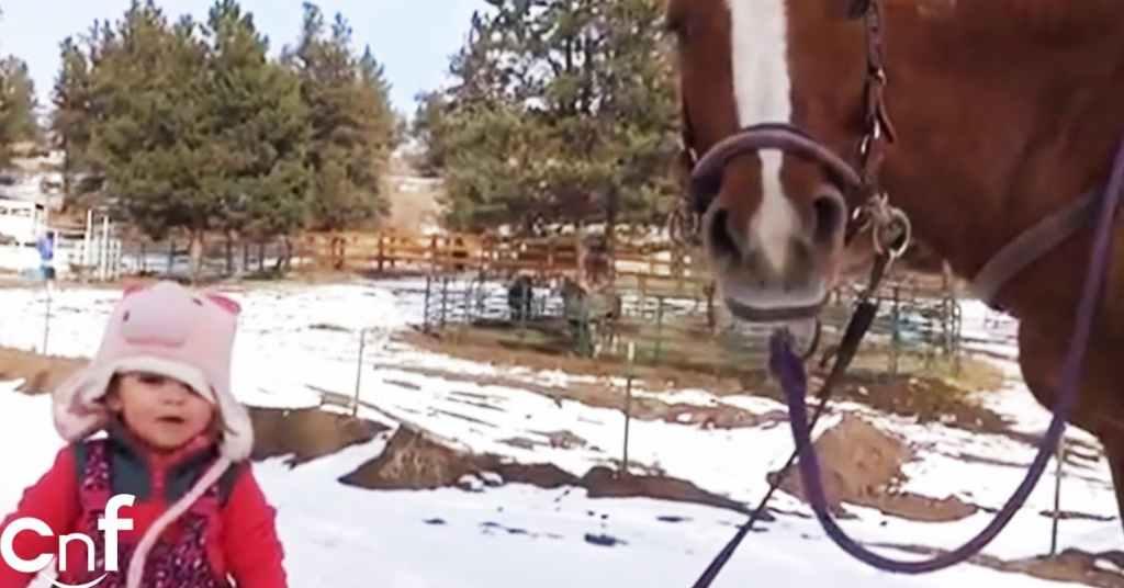 paard en meisje zijn beste vrienden