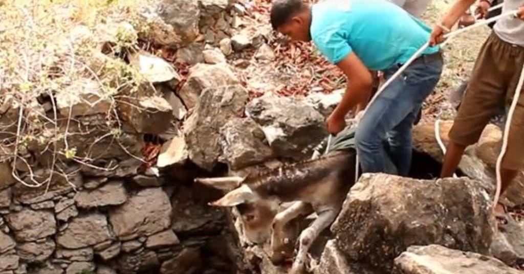 redding van een ezeltje 3