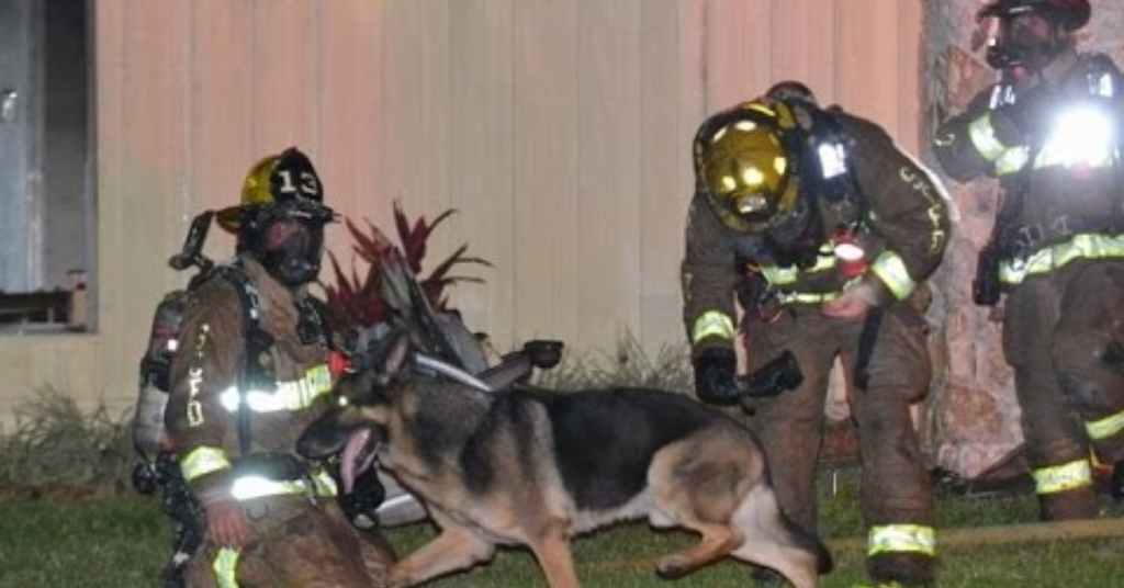 reddingshond redt peuters uit brandend gebouw 1a