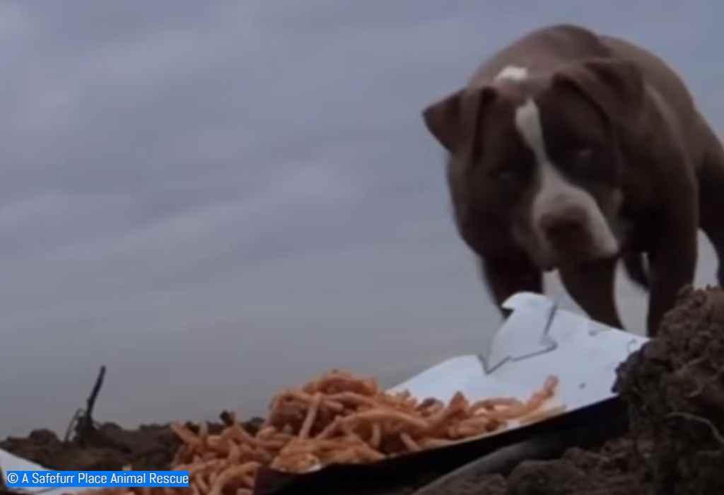 achtergelaten hond die wordt gered 2a