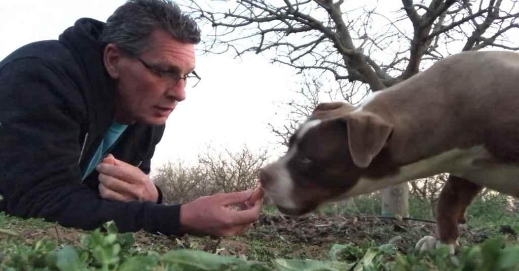 achtergelaten hond die wordt gered 5