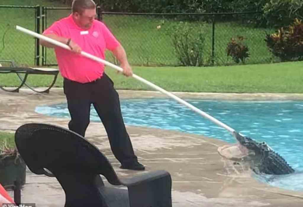 alligator in zwembad 1a