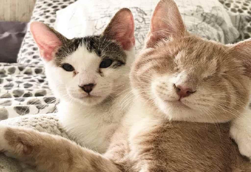 blinde kitten wordt gered 1a