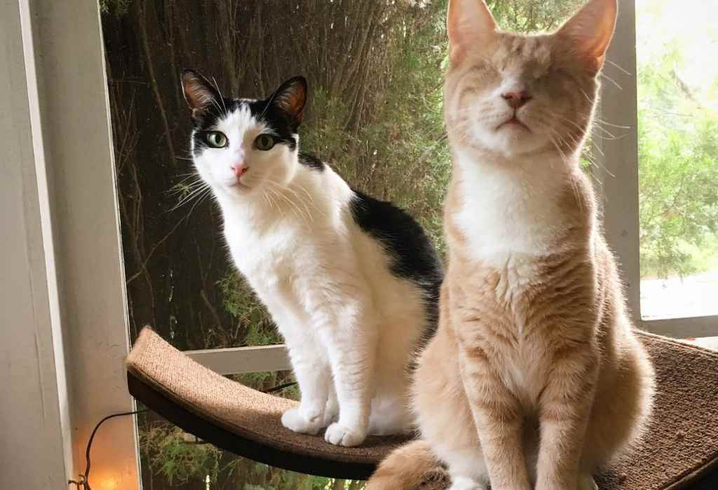 blinde kitten wordt gered 2a