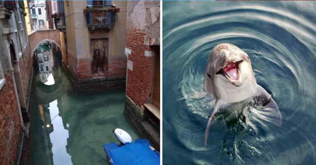 dolfijnen in italie 5