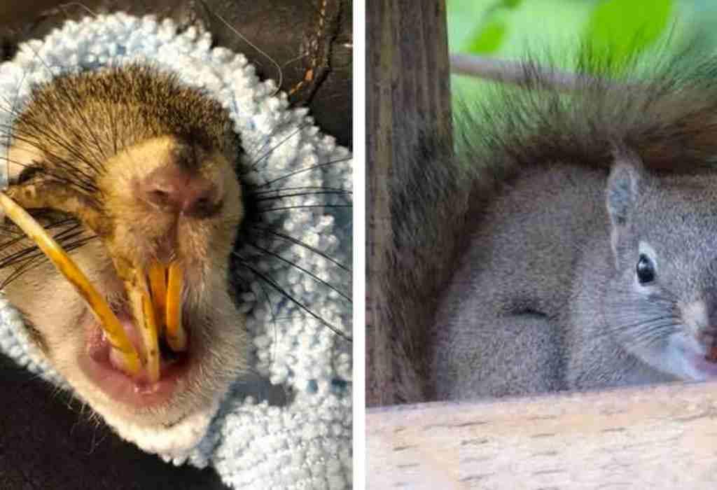 eekhoorn gered 2a