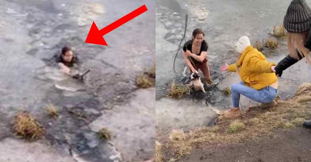een hond redden 5