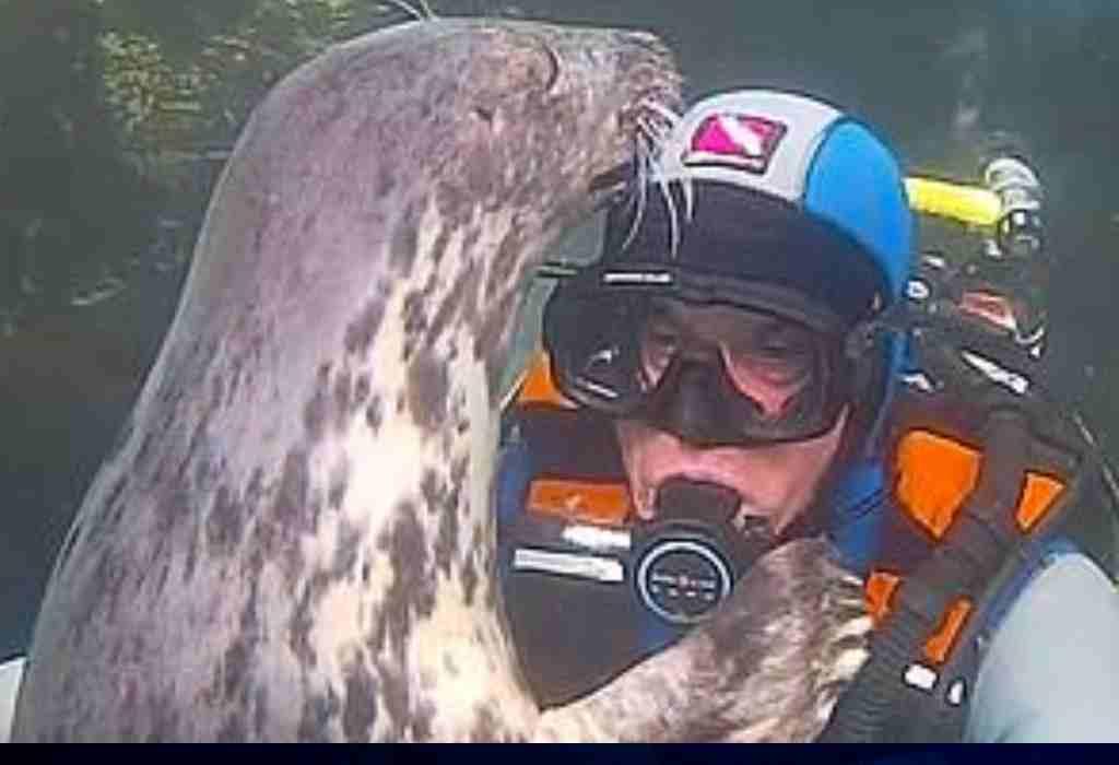 een zeehond knuffelen 2a