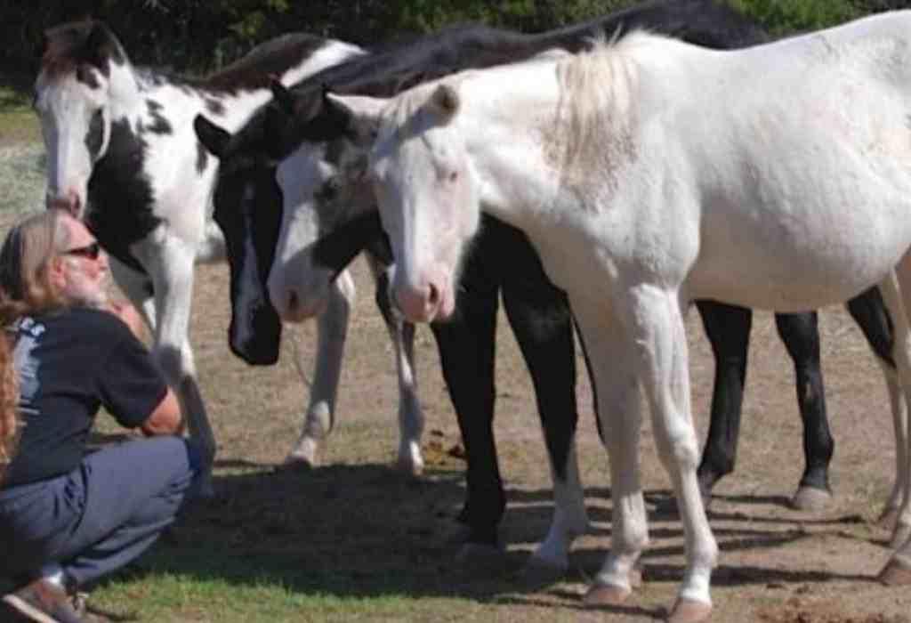 het leven van paarden redden 1a