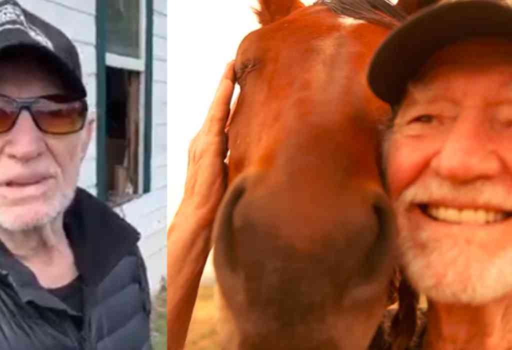 het leven van paarden redden 3a