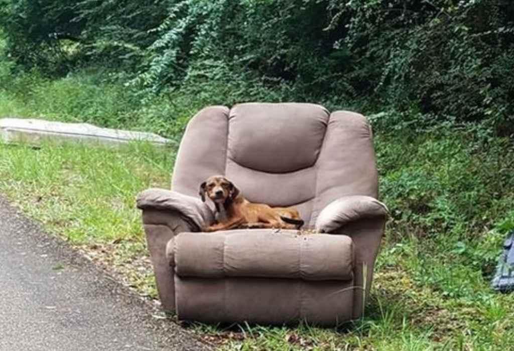 hond dumpen 3a