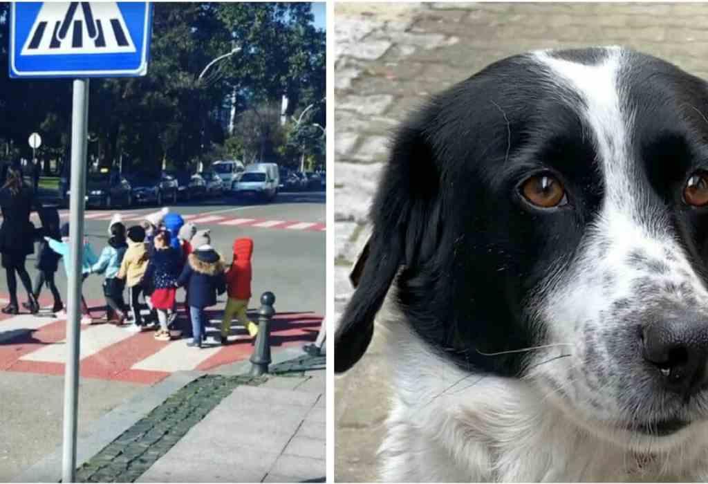 hond helpt bij het veilig oversteken 1a