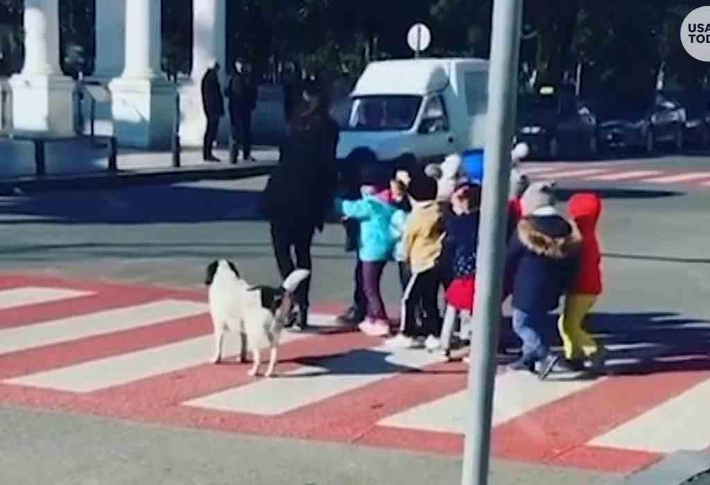 hond helpt bij het veilig oversteken 2a