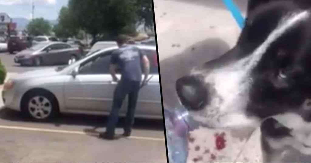 hond in een bloedhete auto 5