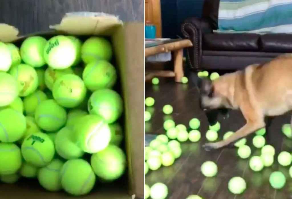 hond krijgt een cadeau 1a