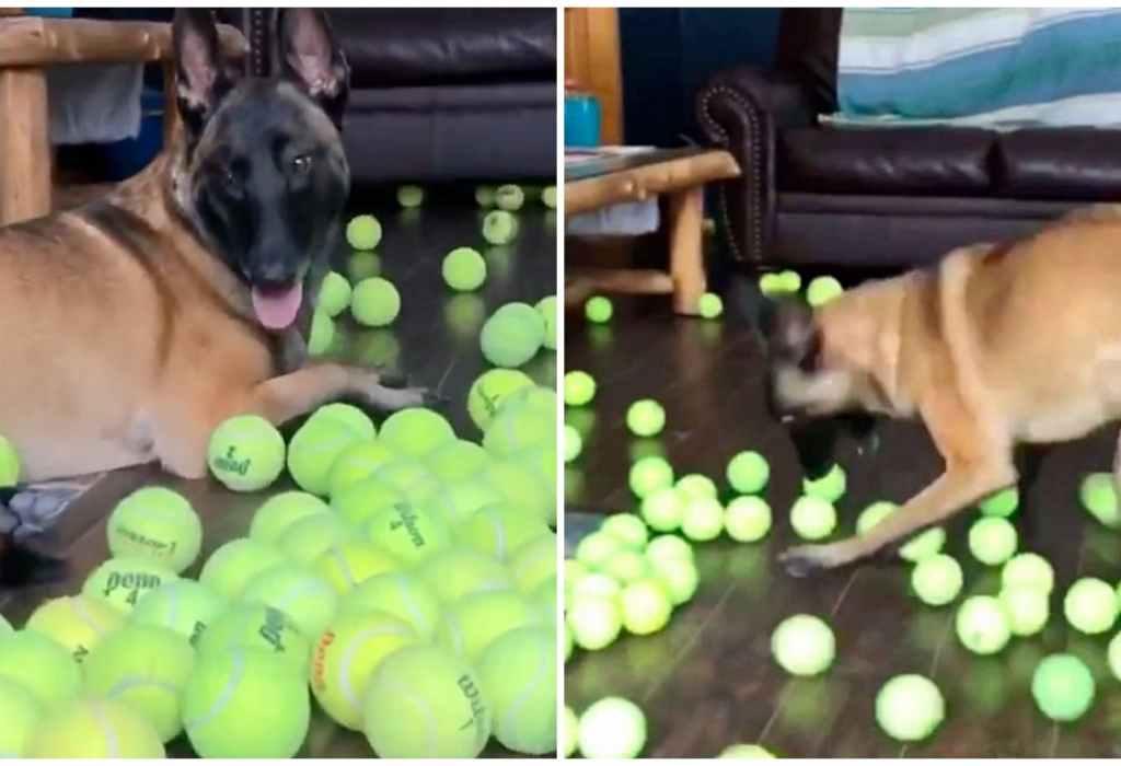hond krijgt een cadeau 2a