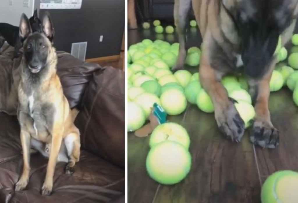 hond krijgt een cadeau 3a