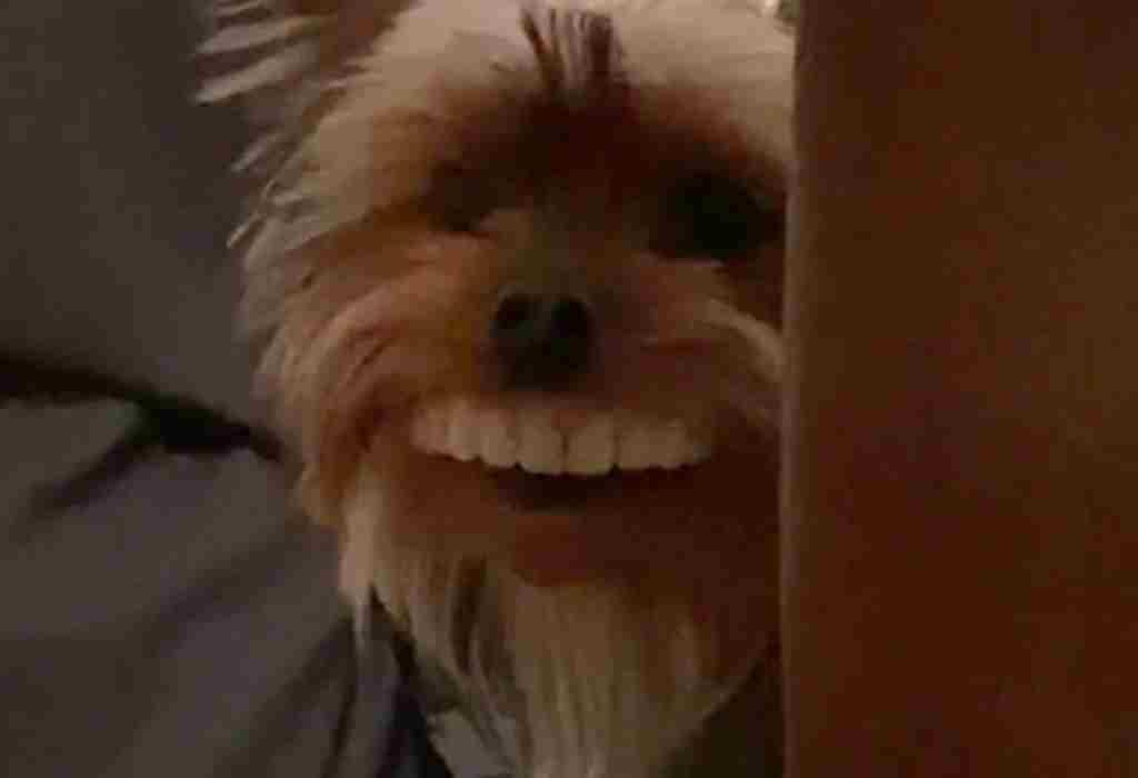 hond met kunstgebit 4a