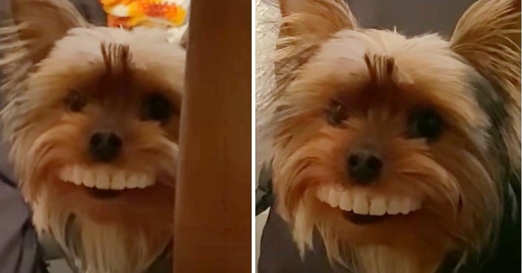 hond met kunstgebit 5