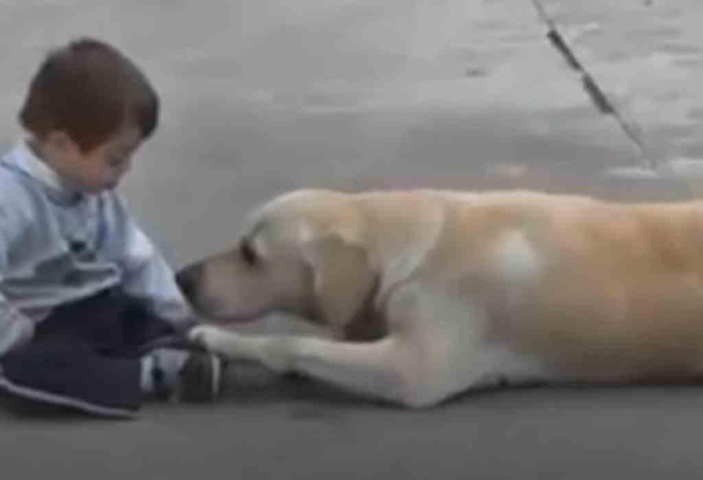 jongetje met down getroost door hond 1a