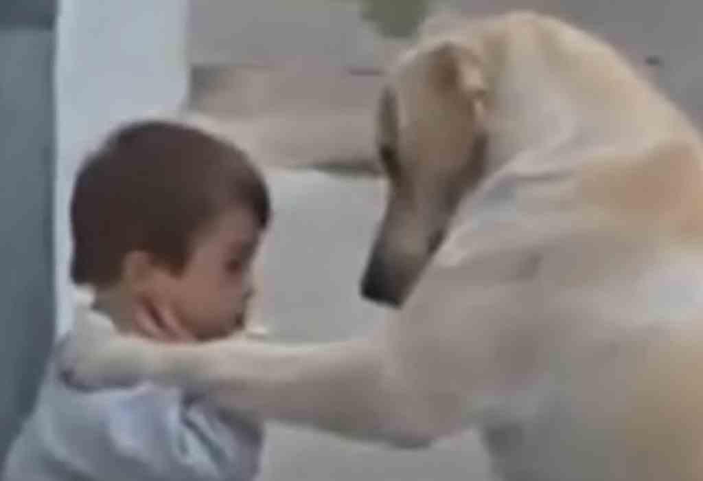 jongetje met down getroost door hond 2a