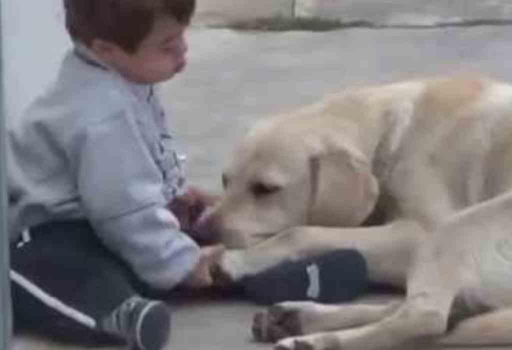 jongetje met down getroost door hond 3a