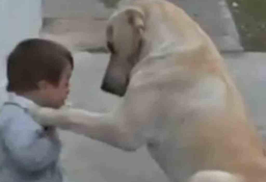 jongetje met down getroost door hond 4a