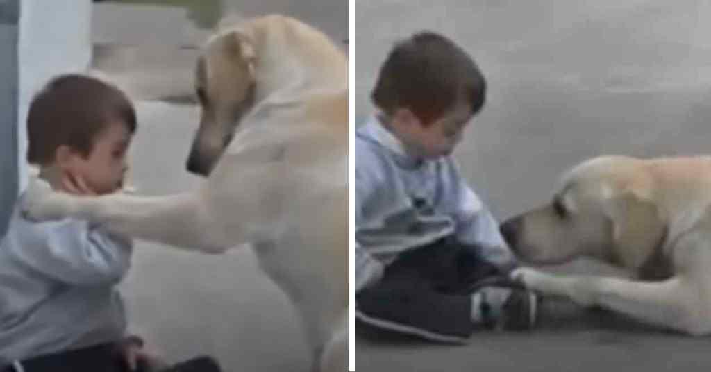 jongetje met down getroost door hond 5