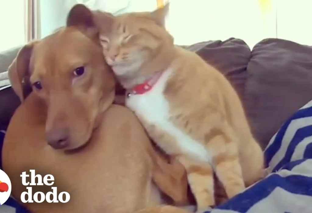 kat troost een bange hond 1a