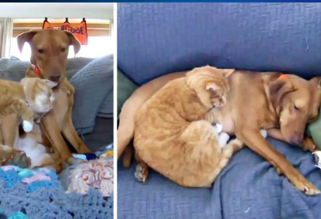 kat troost een bange hond 3a