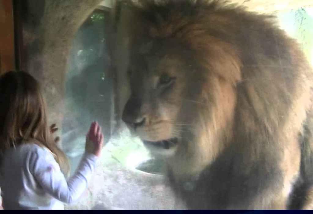 leeuw voor raam 1a