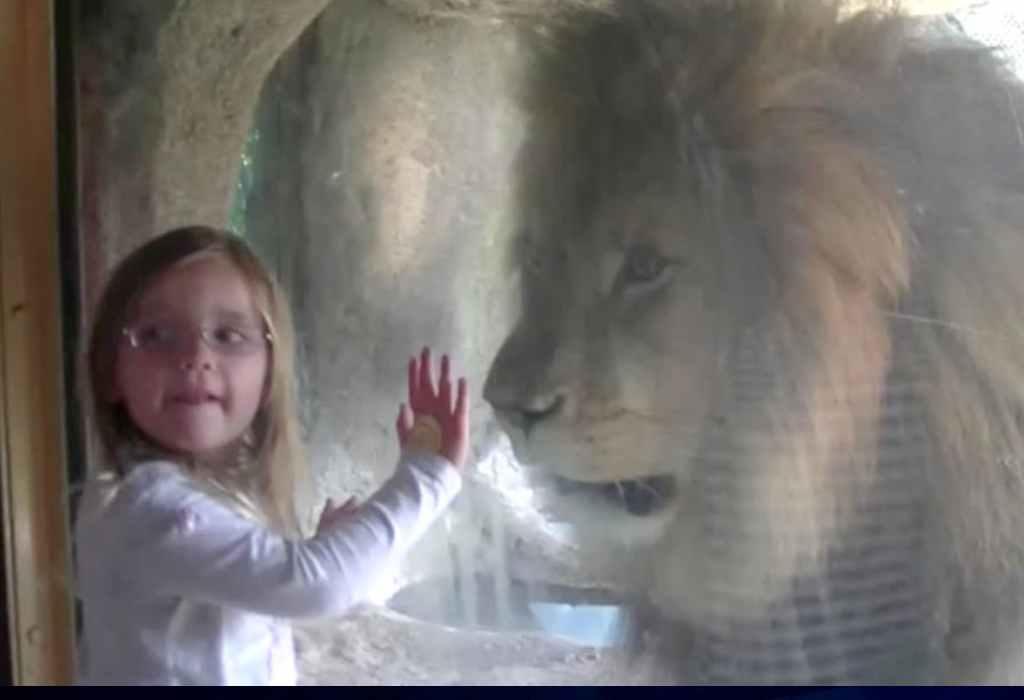 leeuw voor raam 2a