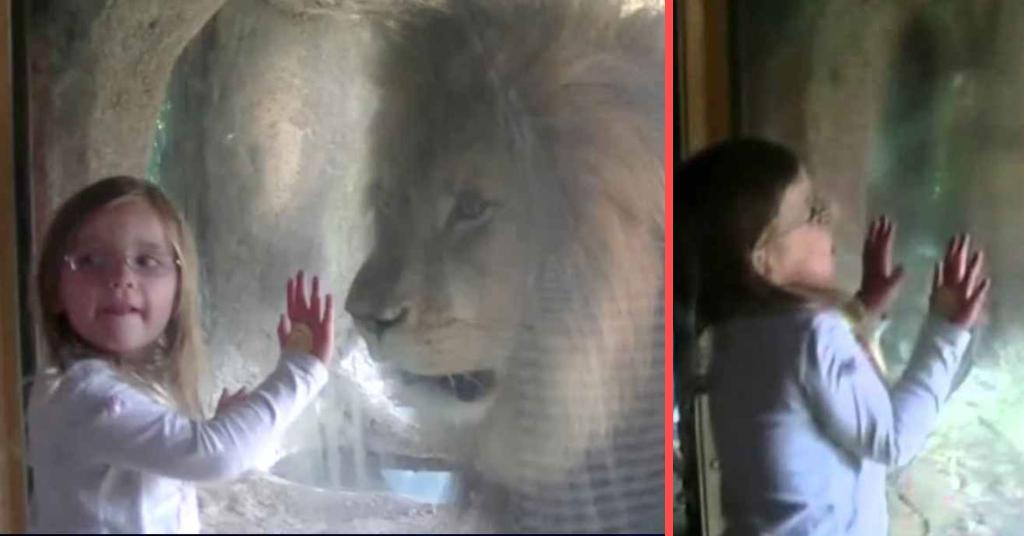 leeuw voor raam 4