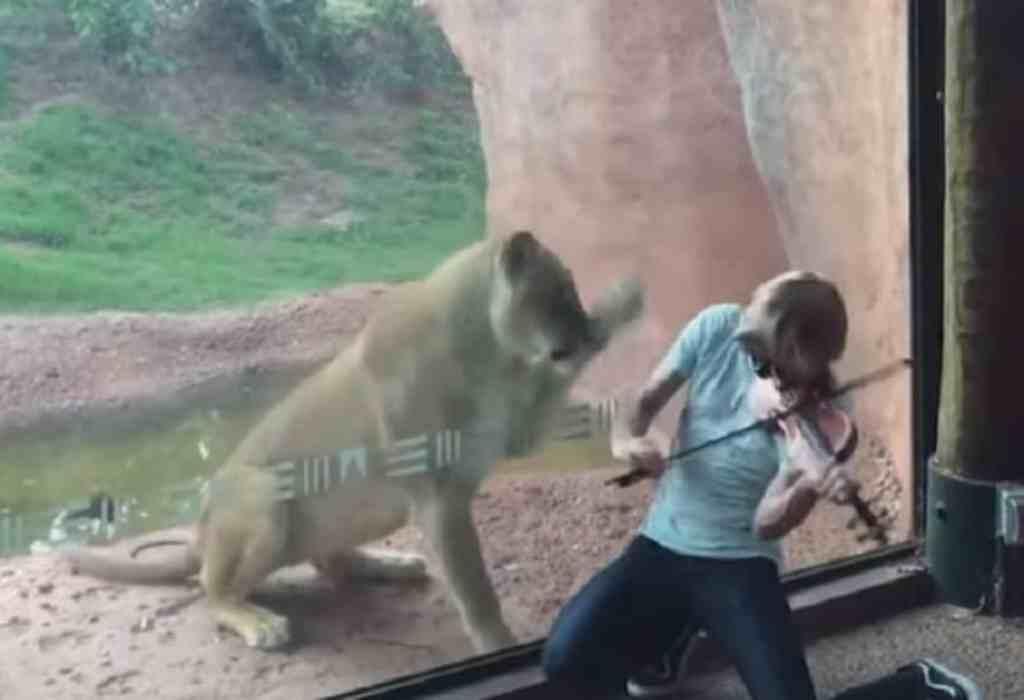 met een viool voor een leeuwin spelen 2a