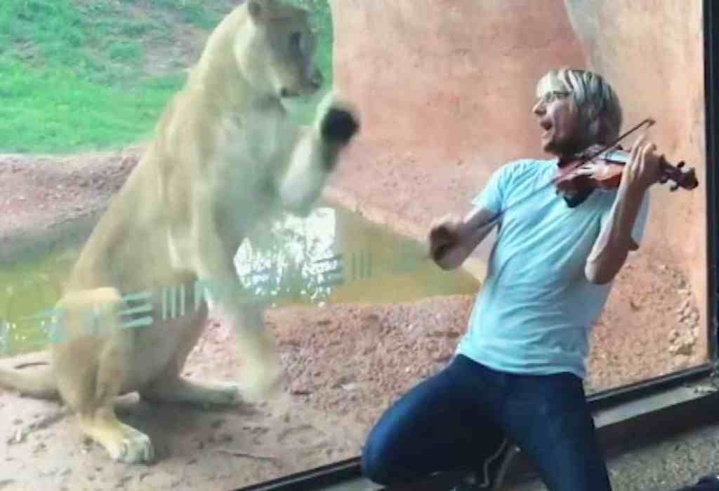 met een viool voor een leeuwin spelen 3a