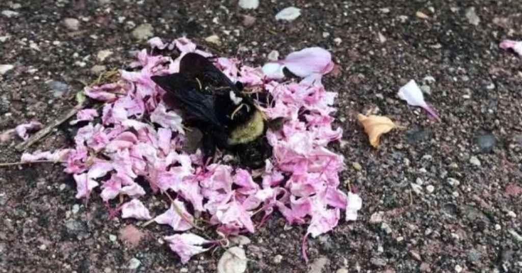 mieren begrafenis 4