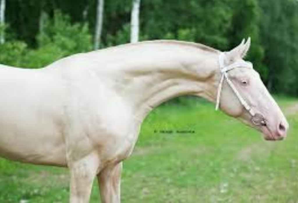 mooiste paard ter wereld 2a