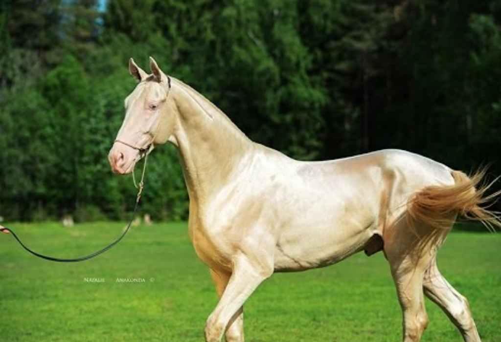 mooiste paard ter wereld 3a