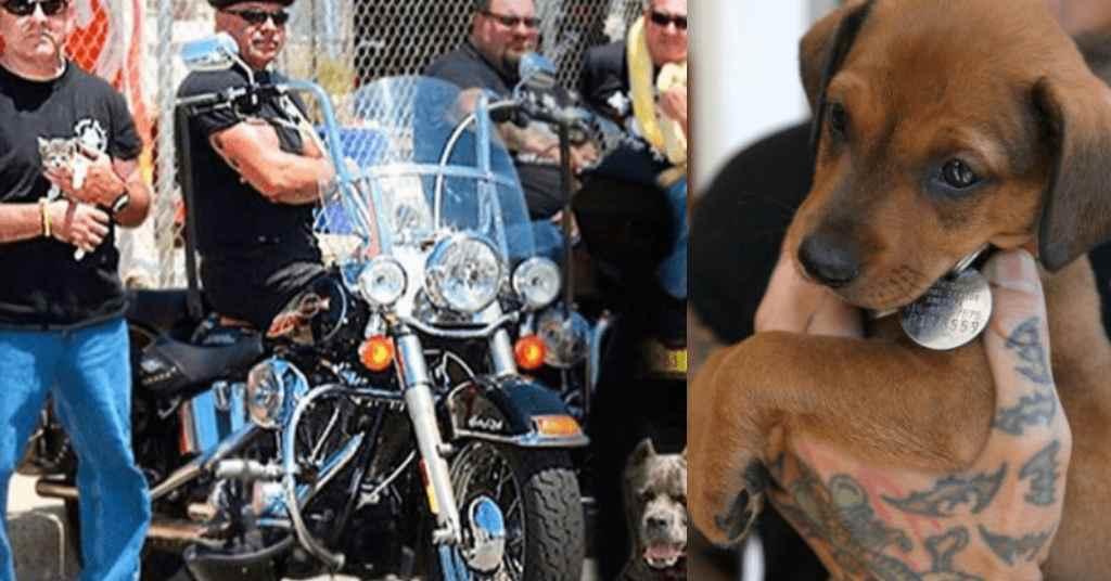 motorbende redt dieren 4